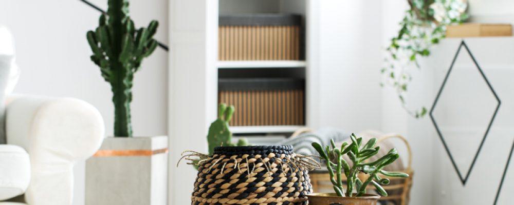 Angolo verde | Piante verdi in casa